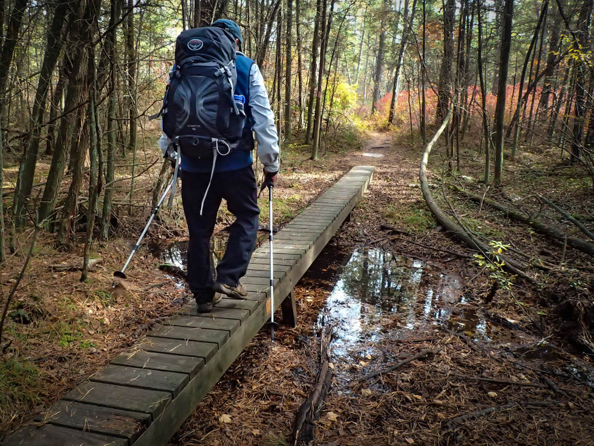 October 6, 2016 / On the Batona Trail between highway 532 and the Botana Campgrounds.  with Pinelands Adventures Guide and Naturalist John Volpa. Photos by Bob Laramie